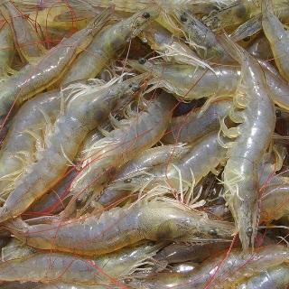 [슈퍼마트] 국내산 친환경인증 왕새우 1kg 35마리 (냉동)